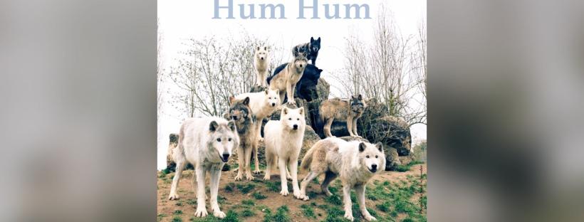 Cover du EP «Blueberries» du duo Hum Hum